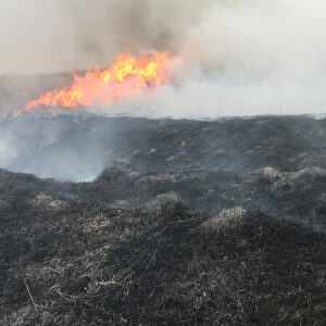 Prescribed Burning: The Benefits and Why It Works