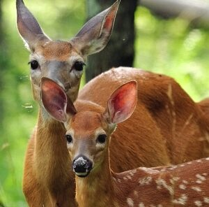 3 Ways To Give Fawns a Head Start