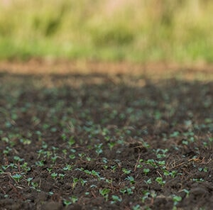 How to Improve Soil Quality in your Food Plot