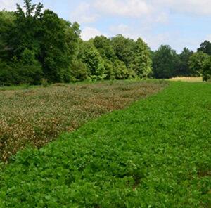 Advanaced Food Plot Planting Tactics