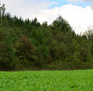 Feeding Food Plots: Water Soluble? Drought Solvable