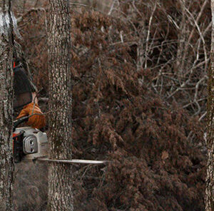 Hinge  Cutting Trees : Creating Edge Cover in Food Plots