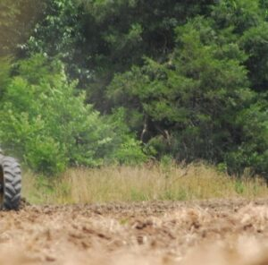 When Should You Plant Your Food Plot?