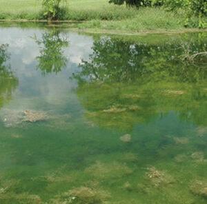 Applying Pond Fertilizer Tips