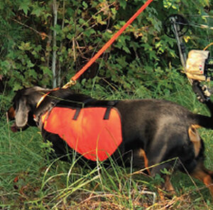 What to look for in Deer Tracking Dogs