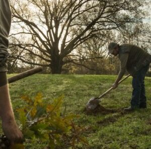 4 Tips When Planting Trees For Wildlife