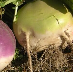 Winter Bulbs & Sugar Beets