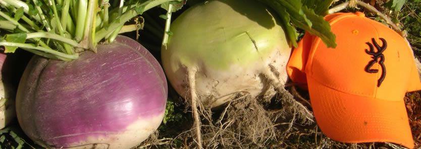 biologic winter bulbs & sugar beets
