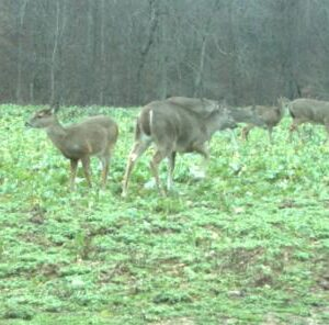 3 Reasons Why Managing Your Deer Herd Creates Better Hunting Opportunities