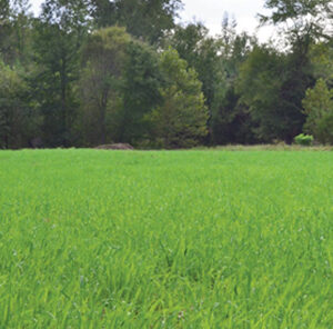 Food Plot Crop Rotation for Healthy Soils & Better Yield