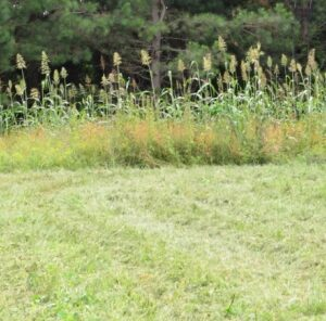 """4 Tips for Helping Whitetails Feel """"Safe"""" In Your Food Plots"""