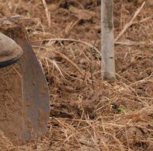 3 Tips For Tree Planting Success