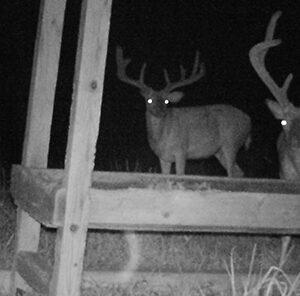 Feeding Deer Year Round: Benefits