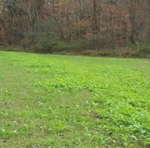 Proper Seed Distribution for Better Food Plots
