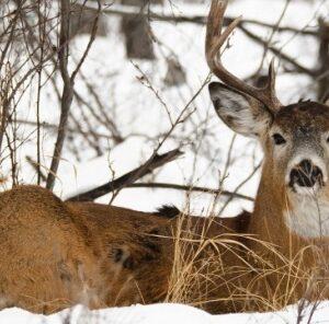 Late Season Hunting Tactics: Herd Status