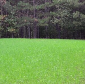 4 Key Steps to a Successful No Till Food Plot