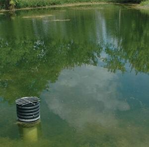 Fish Pond Fertilization Explained
