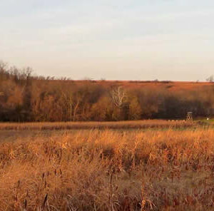 Turkey Habitat: The Perfect Turkey Hunting Grounds