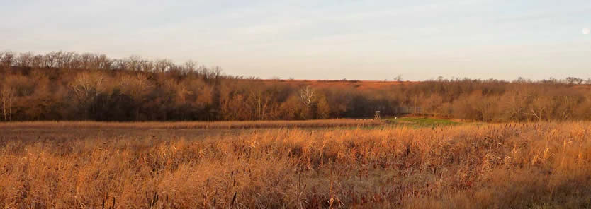 turkey habitat