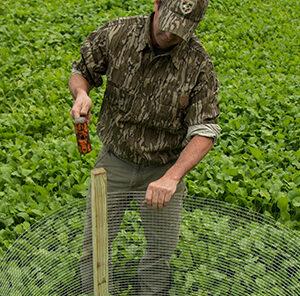 Food Plot Utilization Cage – Measuring Food Plot Usage