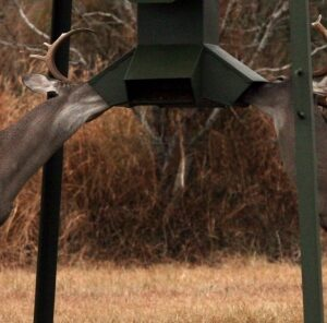 Supplemental Feeding Deer: What Are The Advantages?