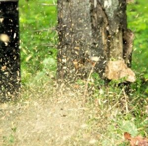 Not All Trees Are Created Equal: How to Improve Hunting by Removing Undesirables
