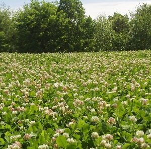 "7 tips on keeping your food plots ""weed free"""