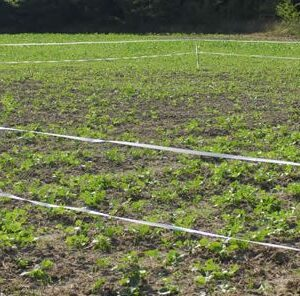 Using a Plot Protector To Control Access to Fall Food Plots