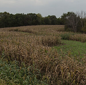 When to Plant Food Plots