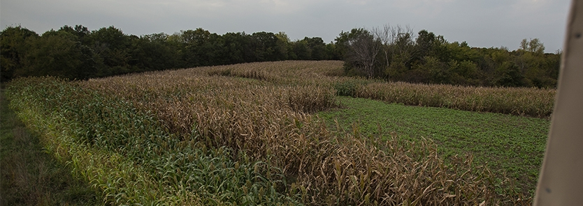 when-to-plant-food-plots