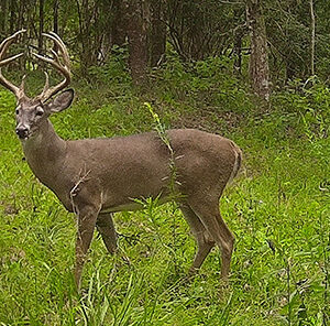 How to Set Up a Trail Camera for Deer