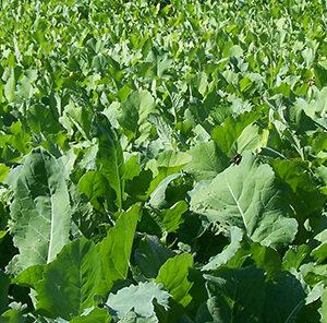 Foliar Fertilizer: Feeding Your Food Plot