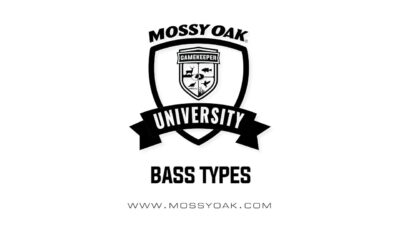 How many bass types are there?