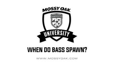 When do bass spawn?