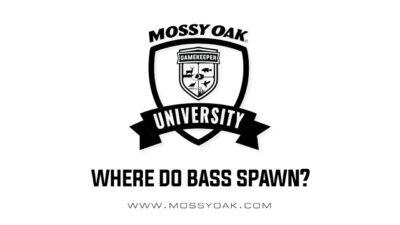 Where do bass spawn?