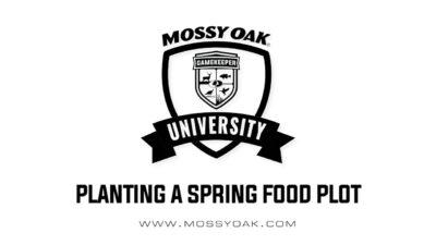 Planting a spring food plot