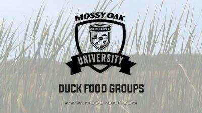 Duck Food Groups