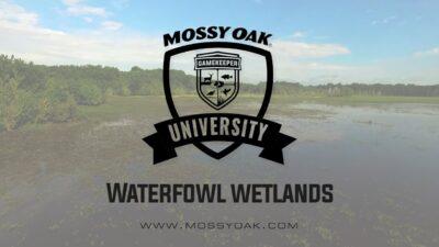 Waterfowl Wetlands