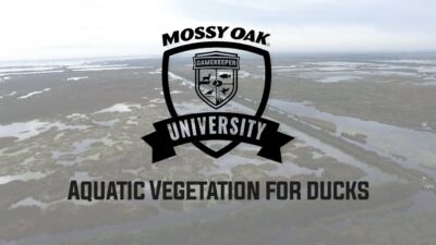 Aquatic Vegetation for Ducks