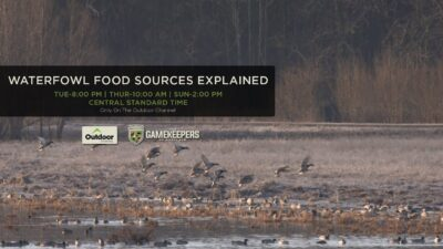 The GameKeepers of Mossy Oak TV: Waterfowl Food Sources Explained Trailer