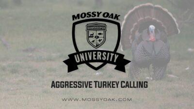Aggressive Turkey Calling