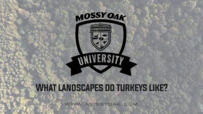 What Landscapes Do Turkeys Like?