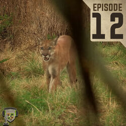 EP:12 | Southern Long Tailed Cat Part II