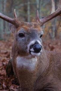 deer-eyesight-sense