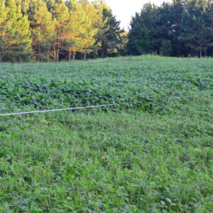 Food Plot Fencing Options
