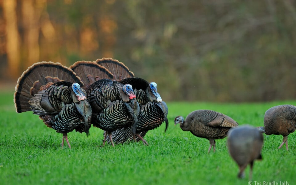 breaking down turkey displays