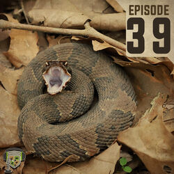 EP:39 | Snake Bite To The Head!
