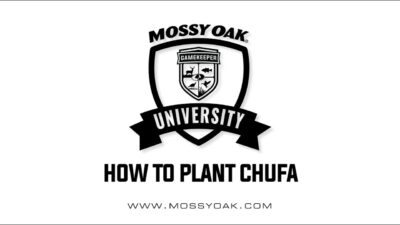 How To Plant Chufa