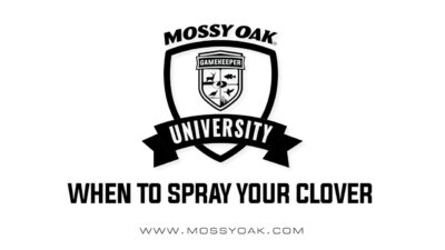 When To Spray Your Clover Food Plots