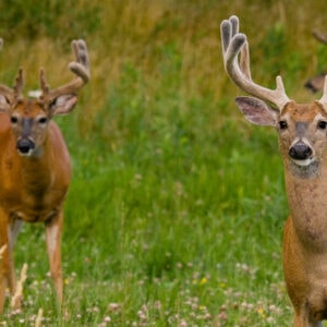 No-Till Food Plots: Increased Results with Fewer Steps